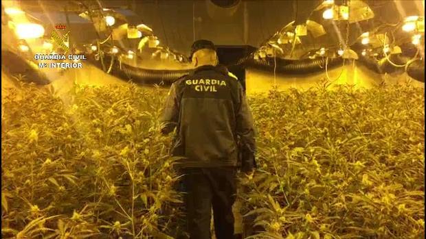 Resultado de imagen de marihuana naves