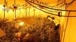 A prisión por cultivar marihuana «pirateando» la luz para no pagar el recibo