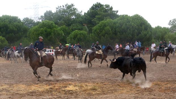 Tordesillas celebró el pasado septiembre la primera edición del torneo del Toro de la Peña en sustitución del Toro de la Vega