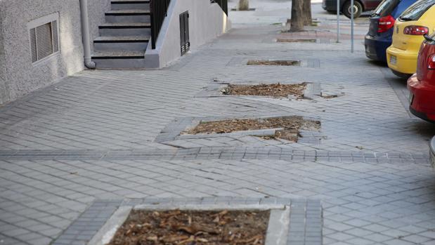 Cinco alcorques consecutivos sin un árbol, en Parque San Juan Bautista