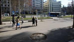 El Ayuntamiento tala 5.000 árboles en menos de tres meses