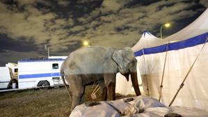 Carmena da el primer paso para prohibir los circos con animales