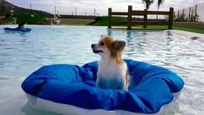 El hotel de superlujo para mascotas que triunfa en Canarias