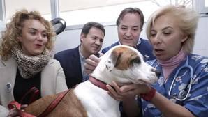 El consejero de Medio Ambiente, Jaime González Taboada -en el centro, con jersey azul- en el Centro Municipal de Atención Animal de Las Rozas