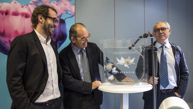 Valencia el a o de la medusa el oceanogr fic exhibir for Promociones oceanografic