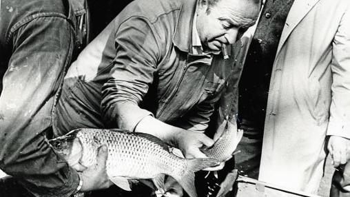 Censo de carpas del lago de la Casa de Campo en 1982