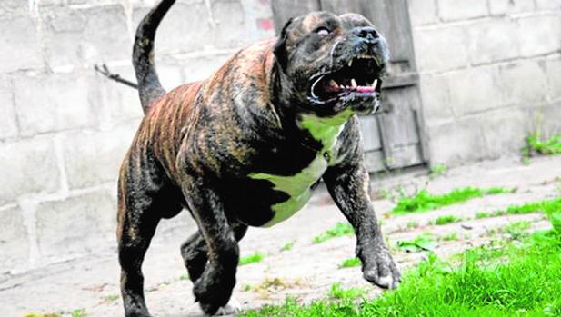Sucesos  Salvaje ataque a mordiscos de un perro a una niña y su madre acf863c0a8