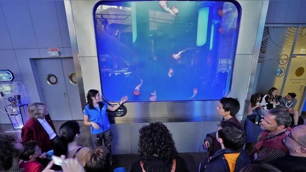Imagen de la exhibición de medusas del Oceanogràfic de Valencia