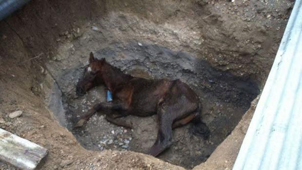 La Fiscalía pide una multa de 1.200 euros a concejal de IU de Rioja (Almería) que arrojó a su caballo agonizante a una zanja
