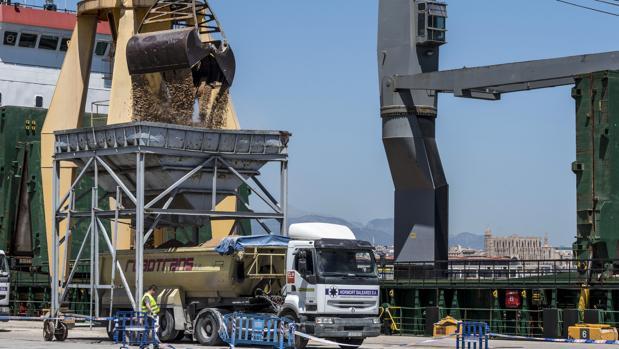 El Ayuntamiento de Calviá ha tomado la «medida cautelar» de paralización de todas las actuaciones relacionadas con la arena