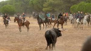 Tordesillas celebró el pasado septiembre el primer Toro de la Peña tras el decreto-ley que prohibía la muerte del animal