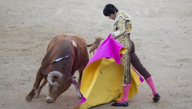«Jabatillo» fue lidiado por Castella el 27 de mayo de 2015, el torero cortó las dos orejas y el toro fue premiado con la vuelta al ruedo y como el mejor de San Isidro