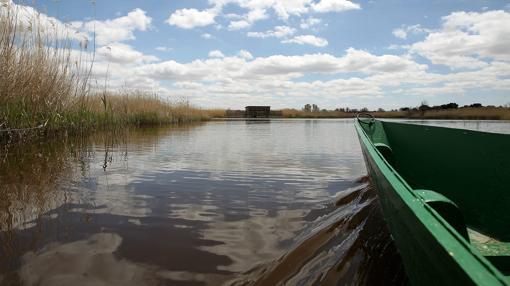 Una barca navega sobre el agua de las Tablas de Daimiel