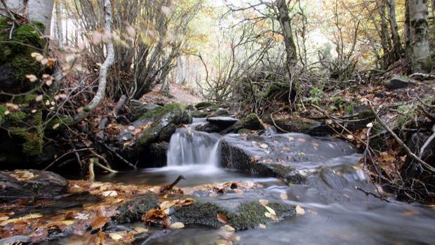 El parque natural de Hayedo de Tejera Negra destaca por la exhuberancia de sus paisajes