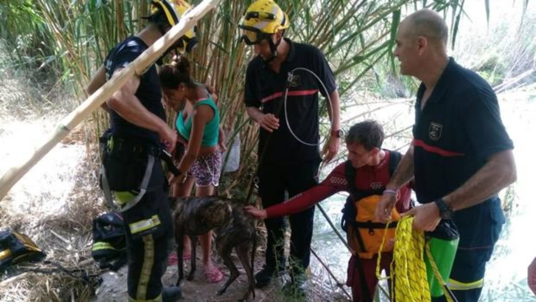 Los bomberos rescatan en Alicante a un galgo atrapado tres horas en una balsa