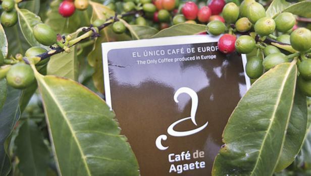 Café de Agaete se promociona como el único que se planta y produce en la UE