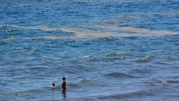 Los científicos anuncian la llegada peces muertos por microalgas a las playas canarias