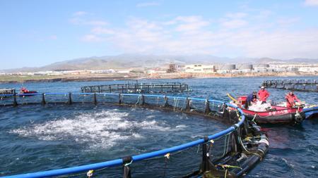 Una piscifactoría en Gran Canaria