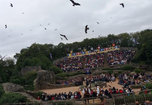Más de 210 aves vuelan al mismo tiempo en el espectáculo de cetrería