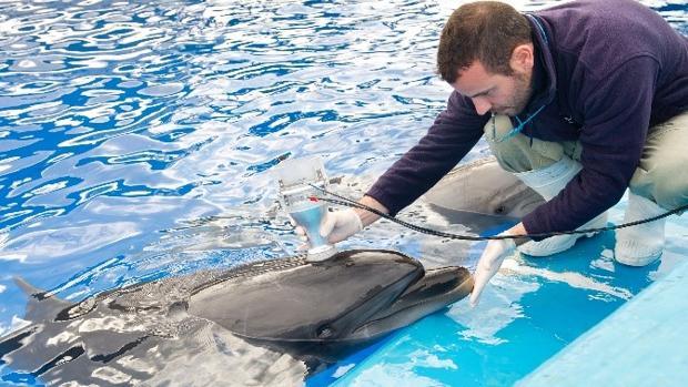Uno de los cuidadores realiza una espirometría a un delfín del Oceanogràfic de Valencia