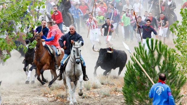 Imagen del Toro de la Vega de Tordesillas (Valladolid) de 2015