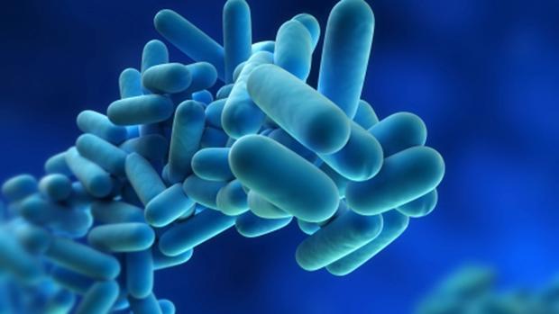 Imagen de la bacteria que causa la infección