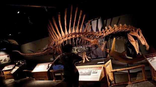 Imagen de la exposición del Museo de las Ciencias de Valencia