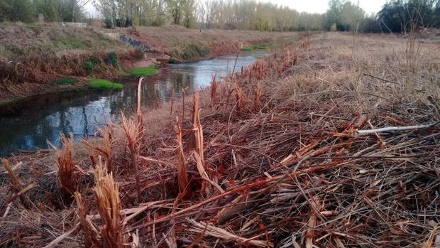 Obras de desbroce del Canal de Castilla cuestionadas por los ecologistas