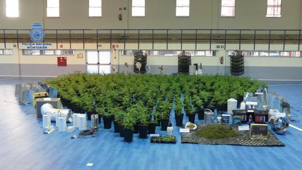 Plantas y material intervenido por los agentes de la Policía Nacional