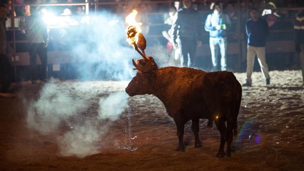Celebración del tradicional Toro Jubilo en Medinaceli, Soria