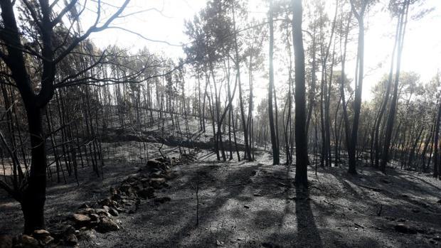 Monte quemado tras los incendios forestales en el municipio pontevedrés de As Neves