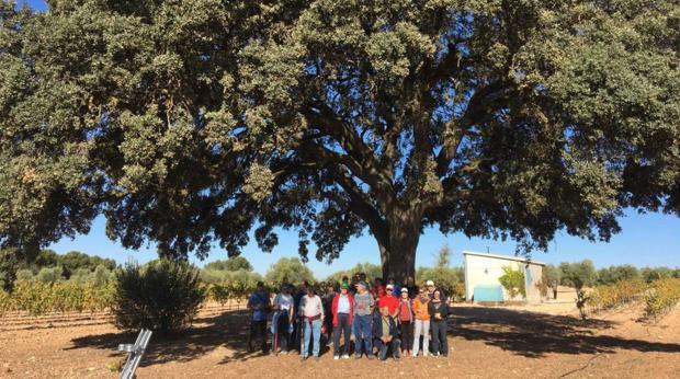 Encina Doña Elena, árbol centenario ubicado en un paraje de plantas aromáticas