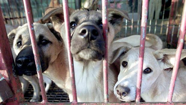 Imagen de perros en una perrera