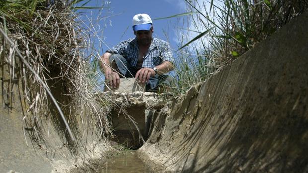 La falta de agua embalsada hace temer por las cosechas de la próxima campaña