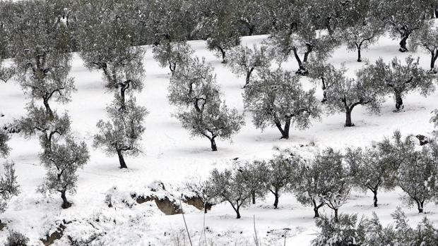 Nieve en el interior de Alicante