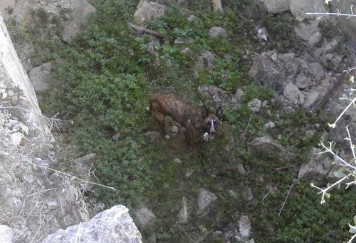 Imagen del perro en el aljibe, antes de ser rescatado