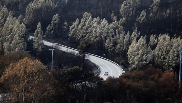 Panorámica de monte calcinado en As Neves (Pontevedra)