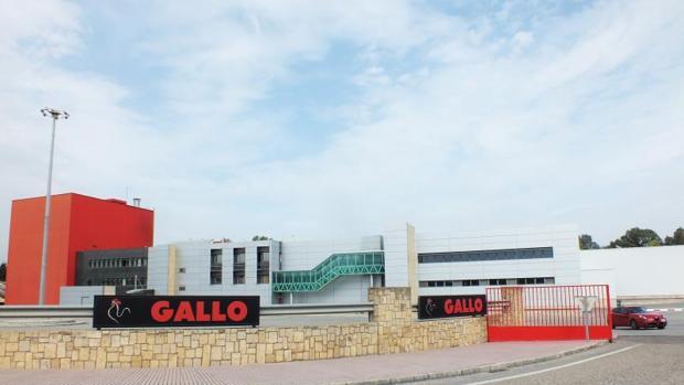 Planta de Gallo en Córdoba