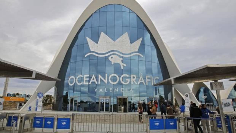 El oceanogr fic de valencia quince a os de amor por los for Promociones oceanografic