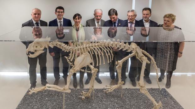 Museu de la Universitat de València: Història Natural M[UV]HN