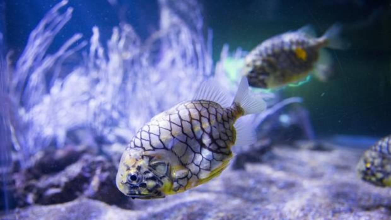 El oceanogr fic estrena esta semana santa misterios del mar for Promociones oceanografic