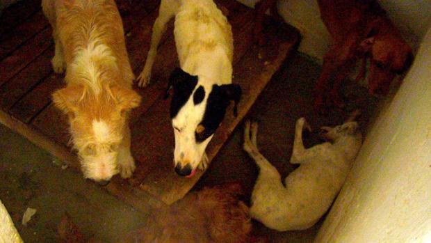 Perros encerrados en un habitáculo sin apenas espacio para moverse