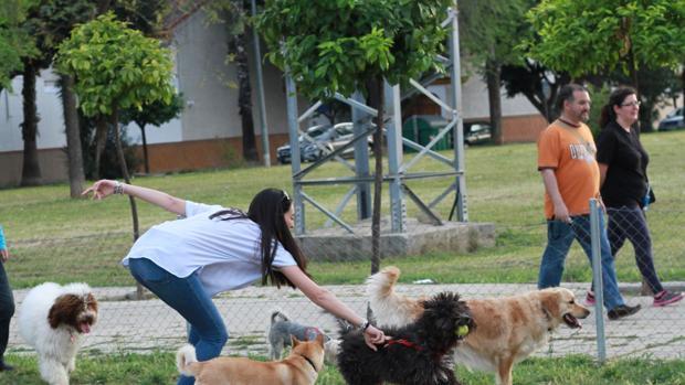 Una joven pasea a sus perros en un parque