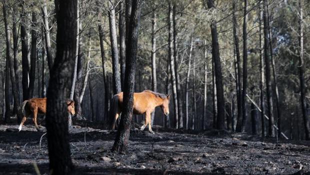 Monte quemado en el municipio pontevedrés de As Neves, tras la ola de incendios del pasado octubre
