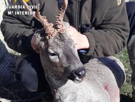 Investigan a un cazador que colgó una imagen en redes sociales con un corzo abatido y sin precinto en Ávila