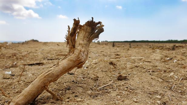Imagen de los efectos de la sequía en el Campo de Elche