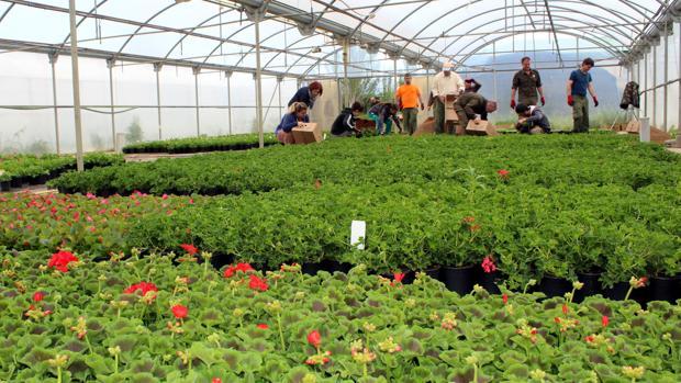 Plantas cultivadas en el Vivero Provincial de la DPH
