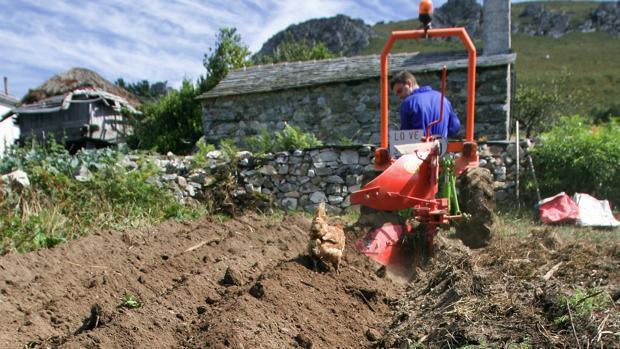 Un agricultor faena en su huerta en Lugo