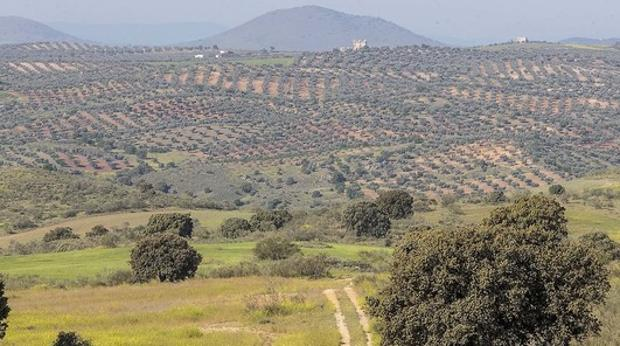 Terrenos donde se asentará el parque temático; al fondo se aprecia la torre del castillo de Guadamur, situado a cuatro kilómetros