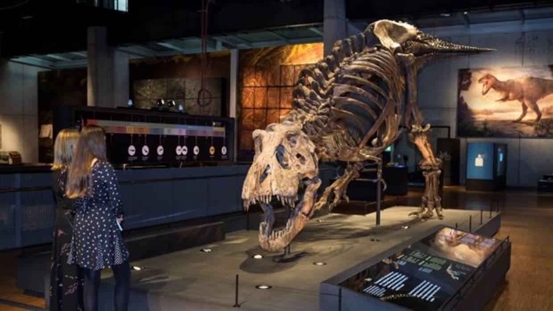 Un Tiranosaurio Rex de récord en Cosmocaixa
